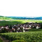 Champagne Vineyard